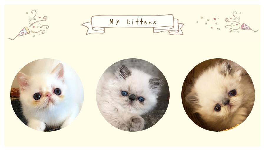子猫の出産情報